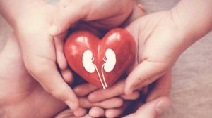 TRIBUNNEWSWIKI – Mengenal Hidronefrosis, Pembengkakan Ginjal Akibat Penumpukan Urine